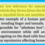 Chlorine Dioxide Effective Viruses Bacteria Fungus
